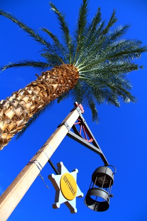 Palmera grande en Old Town Scottsdale, Scottsdale, Arizona photo
