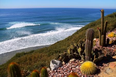 diego: Nice Cattus at California Coastline And Ocean Beaches, San Diego, CA