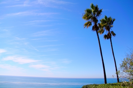 Twin Palms at California Coastline, San Diego, CA photo