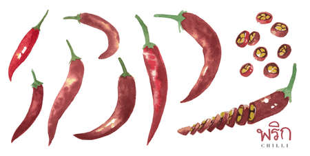 Water color drawing of chilli, the collection of Tom Yum Kung, the signature food of Thailand, with their ingredient. Vektorové ilustrace