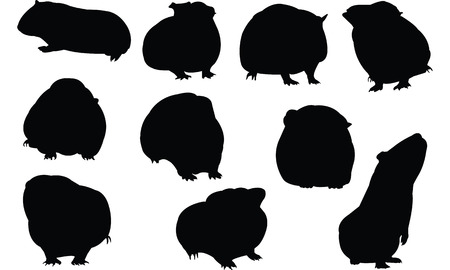 Guinea Pig Silhouette vector illustration  イラスト・ベクター素材