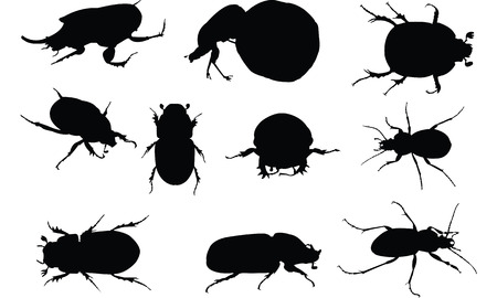 Dung Beetle Silhouette vector illustration