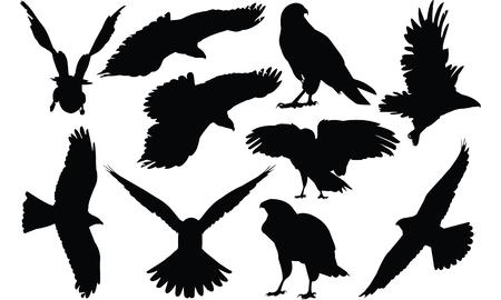goshawk: Hawk Silhouette vector illustration