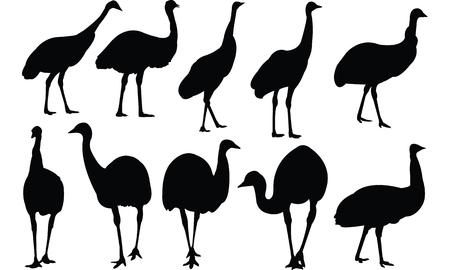 Emu Silhouette vector illustration Illusztráció