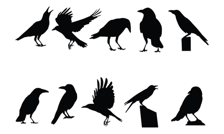 Crow Silhouette vector illustration Illustration