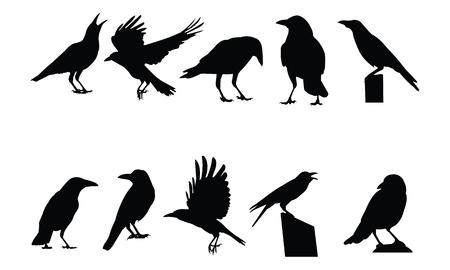 Crow Silhouette vector illustration Vectores