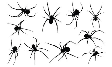 Ilustración de vector de silueta de viuda negra araña Ilustración de vector
