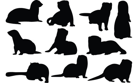 Ferret  silhouette vector illustration