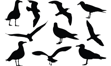 Illustration vectorielle de Sea Gull silhouette Banque d'images - 81774493