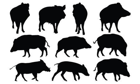 Boar Silhouette vector illustration