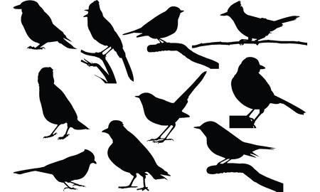 Jay Silhouette vector illustration Illustration