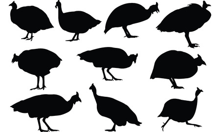 Guinea Fowl Silhouette vector illustration