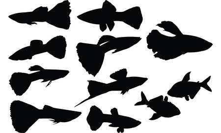 Guppy Silhouette vector illustration Illustration