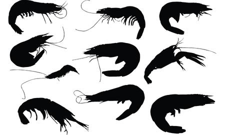 Krill Silhouette illustration vectorielle Banque d'images - 81552834