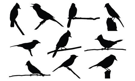 Blue Jay Silhouette vector illustration Illustration