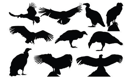Condor  Silhouette vector illustration Ilustracja