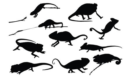 Chameleon Silhouette vector illustration 向量圖像