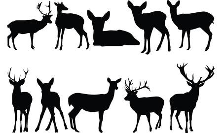 ruminant: Deer  Silhouette vector illustration Illustration