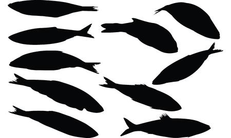 Herring Fish  Silhouette vector illustration