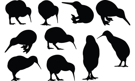 Kiwi Silhouette illustration vectorielle Banque d'images - 81552809