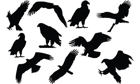 Eagle  Silhouette vector illustration Illustration