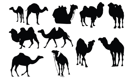 simple life: Camel Silhouette vector illustration