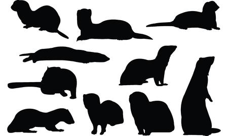 gronostaj: Ermine Silhouette vector illustration