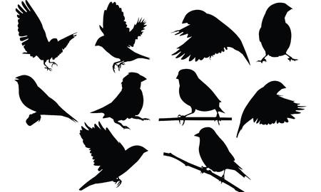 Finch Silhouette vector illustration