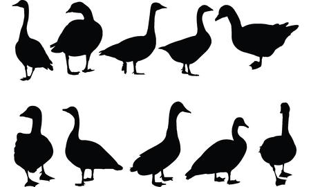 Goose Silhouette vector illustration