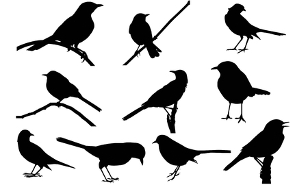 Mockingbird silhouette vector illustration