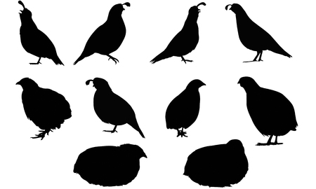 Quail silhouette illustration vectorielle Banque d'images - 81693343