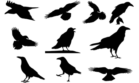 Illustration vectorielle de corbeau silhouette Banque d'images - 81693342