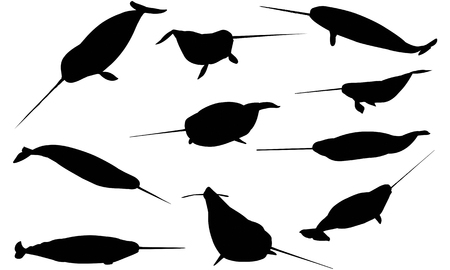 Narwhal silhouette vector illustration Ilustrace