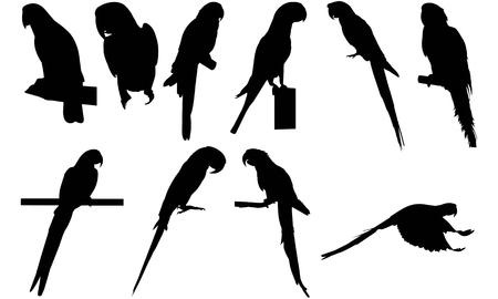 Parrot silhouette vector illustration