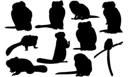 Marmoset silhouette vector illustration