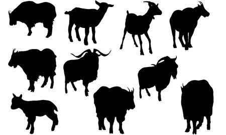 Illustration de silhouette de chèvre de montagne Banque d'images - 81693352