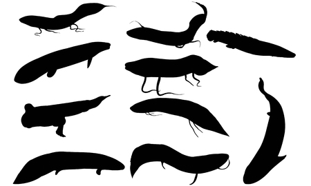 lungfish: Lungfish silhouette vector illustration