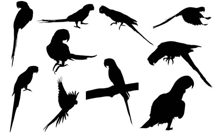 Macaw silhouette illustration vectorielle Banque d'images - 81693353