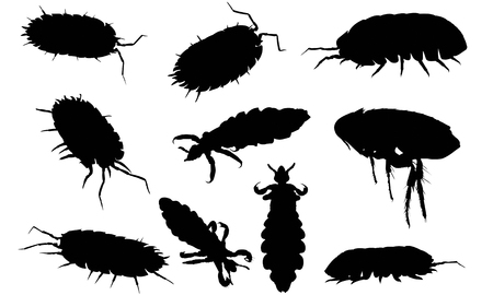 Louse  silhouette vector illustration