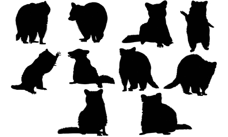 Illustrazione vettoriale silhouette Raccoon Archivio Fotografico - 81781242