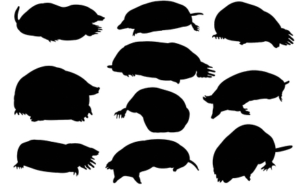 burrowing: Mole  silhouette vector illustration