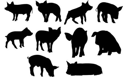 Pig  silhouette vector illustration
