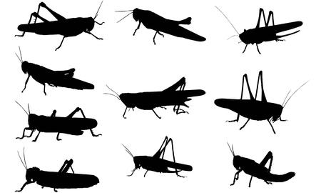 Locust  silhouette vector illustration