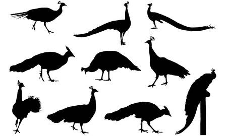 Peafowl silhouette illustration vectorielle Banque d'images - 81781273