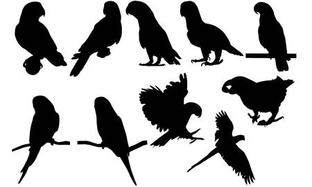 undulatus: Parakeet  silhouette vector illustration Illustration