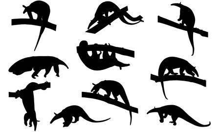 Illustration vectorielle de fourmilier silhouette Banque d'images - 81781275