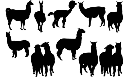 Alpaca  silhouette vector illustration