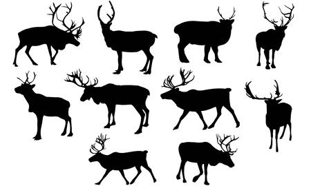 Reindeer  silhouette vector illustration Illustration