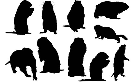 Marmot  silhouette vector illustration
