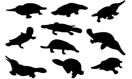 Platypus  silhouette vector illustration